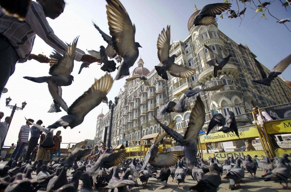 India Pigeons
