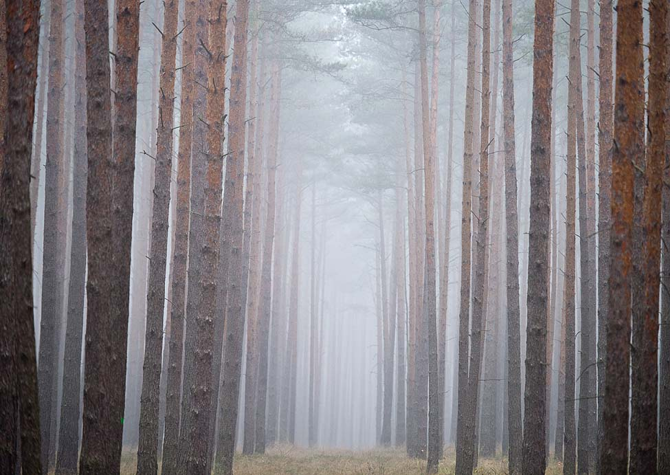 Germany Forest Fog