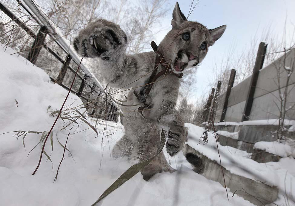 Puma Russia Zoo