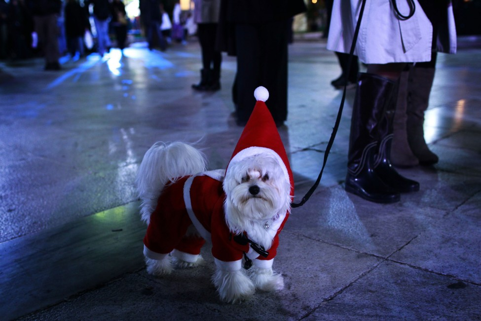 Greece  SantaDog