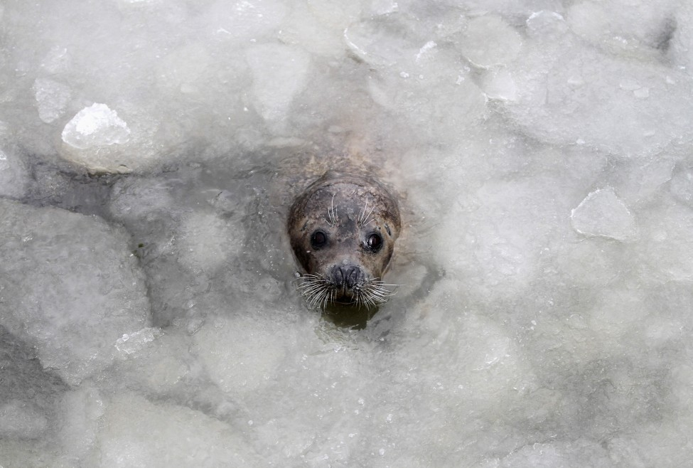 China Seal