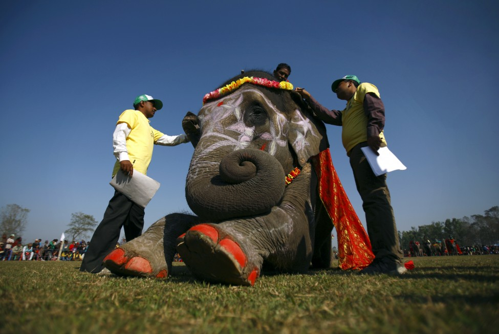 Nepal Elephant Beauty Contest