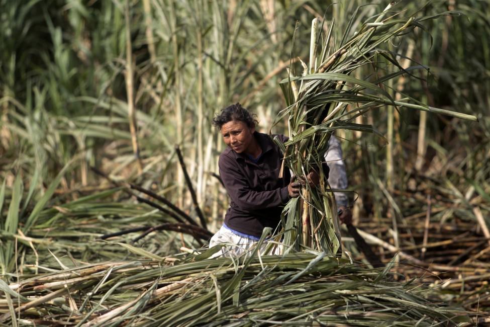 危地马拉﹐收甘蔗的农妇。(路透社)