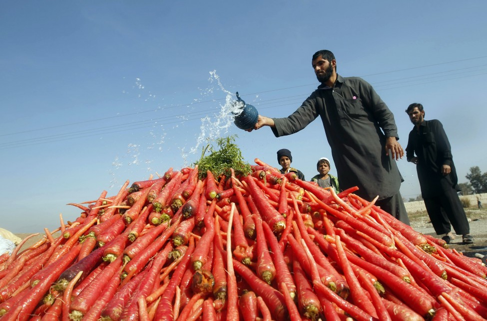 Afghanistan Agriculture