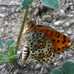 A butterfly in Eskikonacık village, District of Pozantı, Adana Province, Turkey. (Photo by Ayşe Postalli/Turkey/VOA reader)