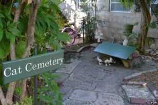 Кошачье кладбище под пальмами.