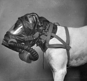 Для армейских собак были разработаны специальные противогазы