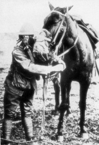 Даже для лошадей придумали импровизированные методы защиты