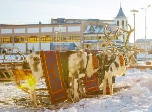 Разрешенное фото. Ямал – один из регионов мира с самой крупной популяцией оленей. VOA Photo: Vera Undritz