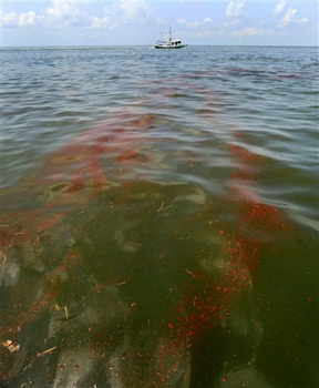 A shrimp boat motors through a ribbon of oil during cleanup operations from Deepwater Horizon oil rig spill,  May 18, 2010. (AP Photo/Charlie Riedel)