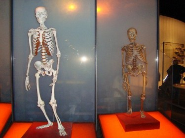 Neanderthal (right) modern Homo Sapiens (left) comparison (Photo: Wapondaponda)