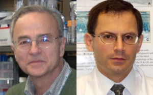 Dr. Gustavo D. Aguirre (left) and Dr. William A. Beltran (right) (Photo: University of Pennsylvania School of Veterinary Medicine)
