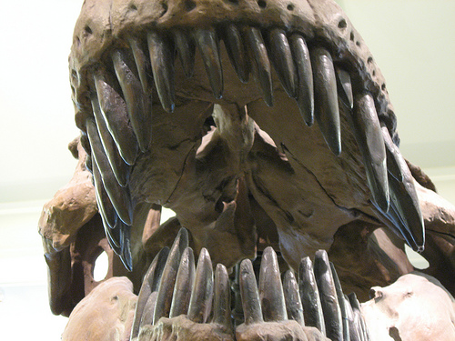 Toothy smile of the Tyrannosaurus Rex (Photo: Michael Basial via Flickr)