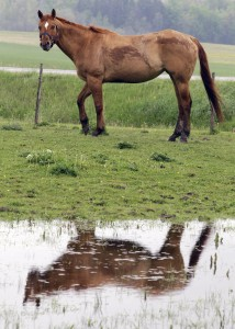 A horse is reflected in a pool of water (Photo: AP Photo/David Duprey)