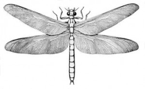 The ancient giant griffinfly Meganeura monyi had a wingspan of up to 75 centimeters (Artwork: Dodoni)