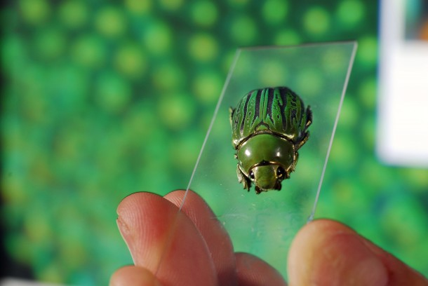 A jeweled beetle Chrysina gloriosa. The enlarged image in the background shows the insect's light-reflecting structures. (Photo: Georgia Tech; photo by Gary Meek)