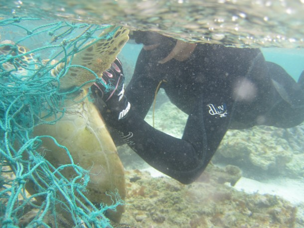 NOAA divers cut a Hawaiian green sea turtle free from a derelict fishing net during a recent mission to collect marine debris in the Northwestern Hawaiian Islands. (Photo: NOAA)