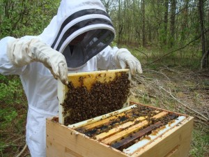 A beekeeper tends to one of her beehives (Photo: Emma Jane Hogbin via Creative Commons at Flickr)