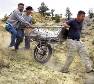 Glenn Storrs, left, helps haul a dinosaur fossil on a contraption made from two hospital gurneys and a motorcycle wheel, dubbed the dino wheel, near Pryor Mountains in Montana. After 10 years of painstakingly unearthing scattered dinosaur fossils at a site along the base of the Pryor Mountains, Storrs believes he has figured out how the bones arrived at their final resting place 145 million to 150 million years ago. (AP Photo/Courtesy of Cincinnati Museum Center via The Billings Gazette)
