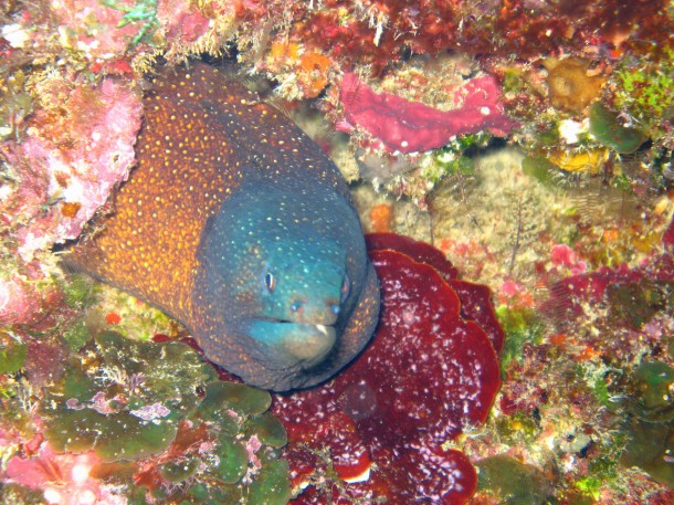 Found in the waters surrounding the Philippines a moray eel poses for a photo. (Photo: M. J. Costello)