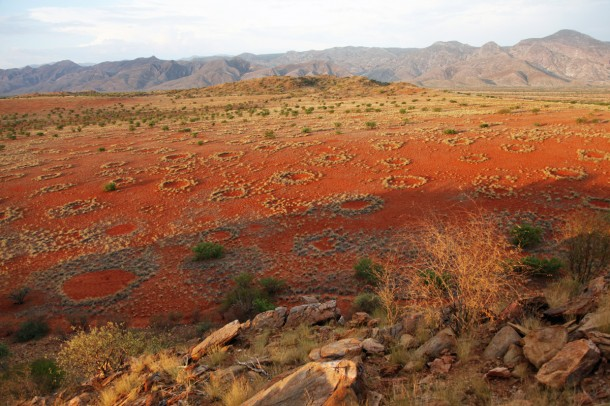 Fairy circles - circular patches of barren land - freckle the landscape in the NamibRand Nature Reserve, Namibia. Scientists are thinking they might be the work of sand termites - Psammotermes allocerus.  (Photo: Norbert Juergens)