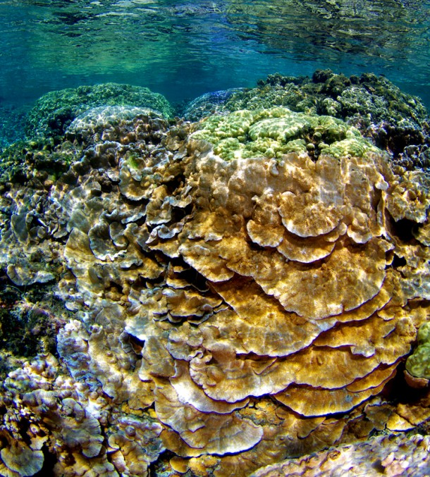 Abundant corals are shown in a shallow Hawaiian lagoon. (Keoki Stender)