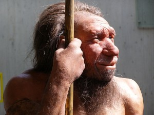 Reconstruction of a Neanderthal male displayed at the Neanderthal Museum in Mettmann, Germany (Erich Ferdinand via Wikimedia Commons)