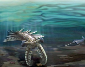 "Marine life during the Cambrian explosion ~520 million years ago. A giant Anomalocaris investigates a trilobite, while Opabinia looks on from the right, and the ""walking cactus"" Diania crawls underneath.(Katrina Kenny & Nobumichi Tamura)"