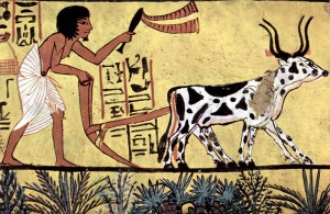 Ancient Egyptian farmer plowing (Wikimedia Commons)