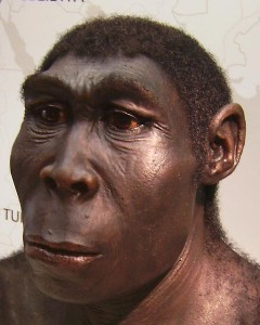 Study suggests that other human ancestor species may actually belong to the species Homo erectus seen here in this reconstruction. (Westfälisches Landesmuseum via Wikimedia Commons)