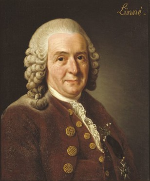 Carl Linnaeus is a botanist who in the 18th century devised a system for classifying living things that is still used today. (Wikimedia Commons)