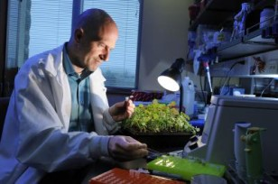 Scientist Boris Vinatzer at work in his lab ( Virginia Tech)