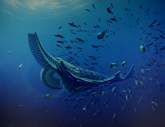 Artists' reconstruction of Tamisiocaris borealis, an ancient marine animal that lived 520 million years ago during the Early Cambrian period. Research led by the University of Bristol UK that studied fossils of this creature found that they used some rather odd facial appendages to filter their food from the ocean. (Rob Nicholls, Palaeocreations)