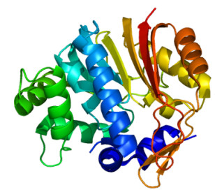 Structure of the NNMT protein (EMW via Wikimedia Commons)