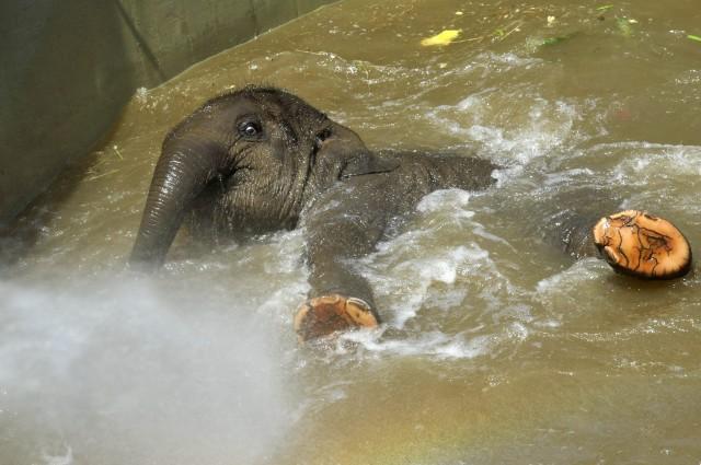 Hungary Zoo