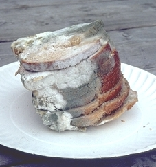 A pile of moldy bread - YUCK! (Maestrosync via Wikimedia Commons)