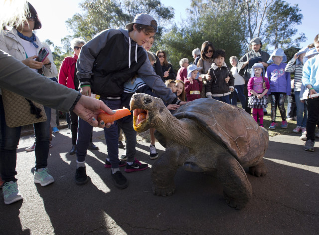 Hugo, a 63-year-old Galapagos Tortoise, is shown here being lured out of his enclosure with a carrot at the Australian Reptile Park near Sydney on July 1, 2014.  Hugo had to leave his home for a time so that he could undergo his annual health and weight check.  This year he weighed in at 166 kilograms which is one kilogram more than last year.  By the way the life expectancy of a Galapagos Tortoise is up to 180 years. (REUTERS)