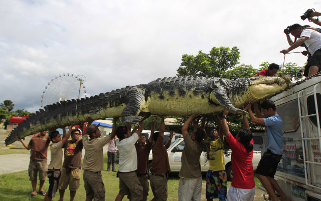"No that's not a real crocodile… On July 5, 2014 workers at Crocodile Park in metro Manila carefully unloaded a 21-foot crocodile robot called ""Longlong"" from the roof of a van.  The lifelike robot croc, that contains thousands of mechanisms, was inspired by Lolong, the largest saltwater crocodile to have been in captivity. (Reuters)"