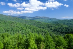 Trees blanket mountains and valleys of southwestern North Carolina in the Nantahala National Forest (USDA)