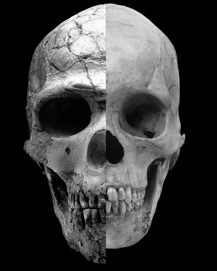 A composite image shows the facial differences between an ancient (high testosterone) and a modern human (lower testosterone) with heavy brows and a large upper face and the more recent modern human who has rounder features and a much less prominent brow. (Robert Cieri, University of Utah)