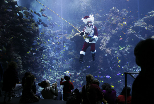 Ho ho ho!  Diver Mark Lane, who was dressed as Scuba Santa Claus, delights children on 12/17/14 as he makes his first dive of the holiday season in the 802,507 liter Philippine Coral Reef tank at the California Academy of Sciences in San Francisco. (AP)