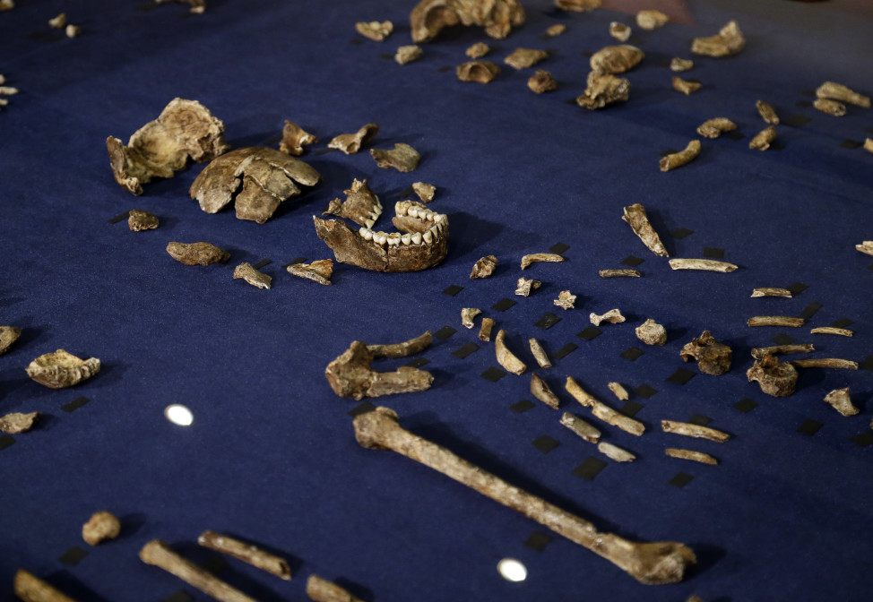 On 9/10/15 scientists in South Africa announced that they had discovered a new human ancestor species.  This is a composite skeleton and other fossil elements of what scientists call Homo naledi.  The new hominid species shows a unique mix of human-like and more primitive characteristics. (AP)