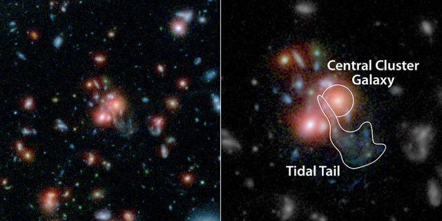 Hubble/Spitzer images of SpARCS1049+56 galaxy cluster. Right panel highlights the larger central galaxy and the remains of the smaller galaxy called the tidal tail.NASA's Hubble and Spitzer space telescopes. (NASA/ESA/STScI/JPL-Caltech/McGill)