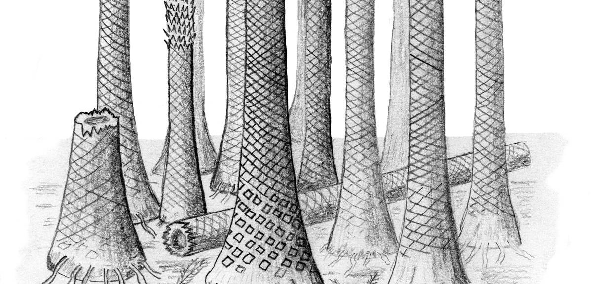 Reconstructed drawing of fossil forest in Svalbard (Cardiff University)