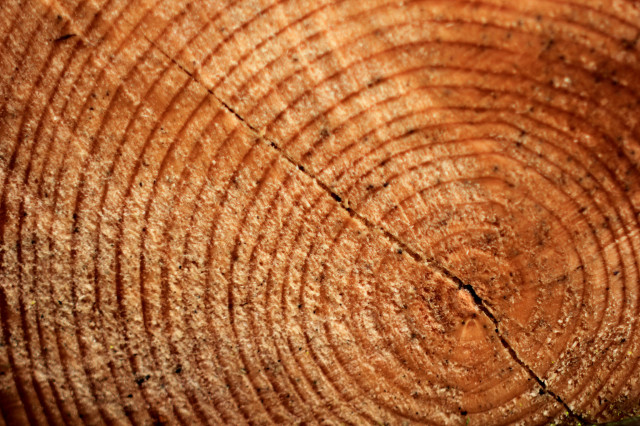 Researchers analyzed tree rings to reconstruct summer temperatures for the last 2,000 years. (Christian Schnettelker via Flickr/Creative Commons)