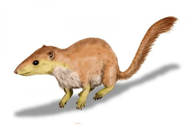 This is an example of an early therian mammal, Purgatorius Union. (© Nobu Tamura)
