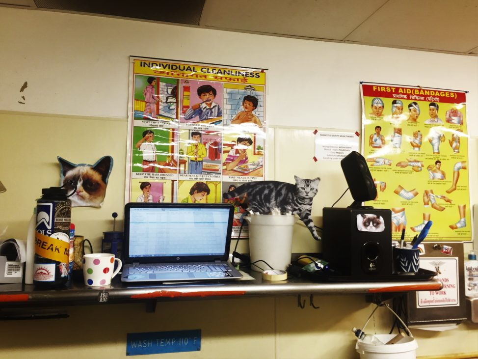 When the going gets tough, the tough decorate their work station with cats, safety posters in foreign languages and blast Black Lips LPs at level 10.