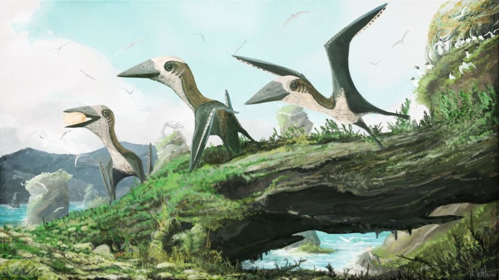 In this artist impression, the small, flying reptiles known as azhdarchoid pterosaurs are not surrounded not by other pterosaurs, but by birds. Some researchers have argued that pterosaurs were ecologically replaced by birds by the Late Cretaceous epoch. However, the discovery of small-bodied pterosaur remains from British Columbia, announced 8/30/16, shows that at least some smaller flying reptiles lived alongside ancient birds. (Dr. Mark Witton)