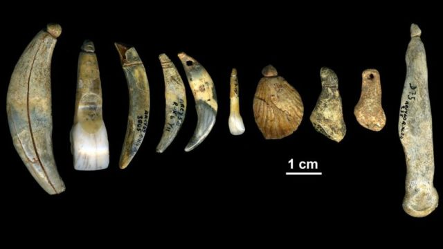 Châtelperronian body ornaments and bone points from the Grotte du Renne in Arcy-sur-Cure. (Dr. Marian Vanheren)