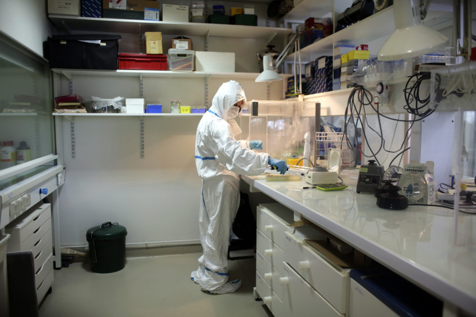Researcher Eva-Maria Geigl is seen in this photo dated June 16, 2017 working in her Monod Institute laboratory in Paris. Geigl recently conducted a DNA study, which looked back thousands of years to gain new insight into the domestication of one of the world's favorite pets, the cat. (AP)